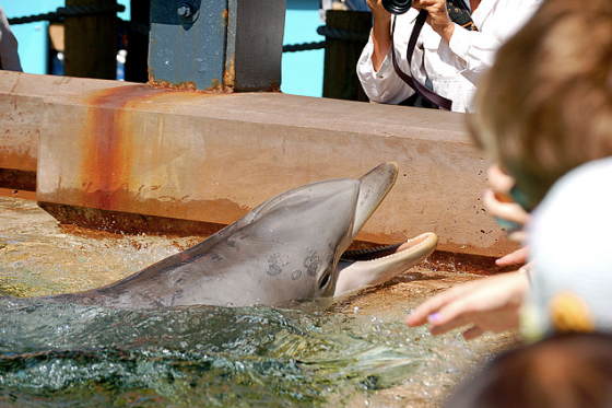 A dolphin in SeaWorld's petting pool has pox virus. Pox virus is associated with stress and a compromised immune system.