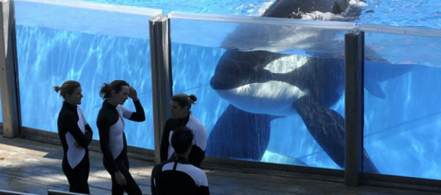 "SeaWorld Lies In Response To ""Blackfish"" | Cetacean ... - photo#6"